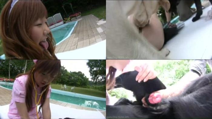 166968051 0456 dgsx dog like short skirt - Dog Like Short Skirt - Dog Bestiality Video