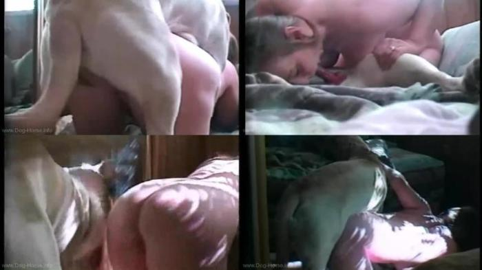 166968495 0484 dgsx playing in bed - Playing In Bed - Dog Bestiality Video