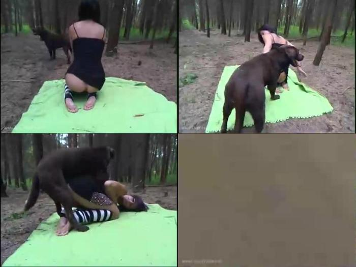 166973485 1374 zs forest animal porn action - Forest Animal Porn Action