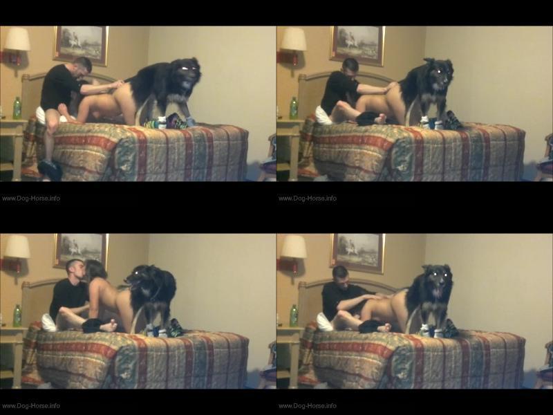 Dog porn free